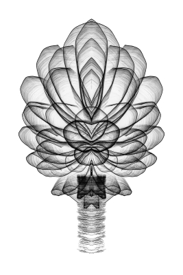 Tiled Image